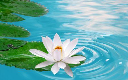 Водна лилия – Спа терапия за сетивата